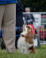 Thame and Oxfordshire Show 2017-86
