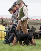 Thame and Oxfordshire Show 2017-93