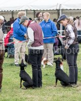 Thame and Oxfordshire Show 2017-95