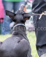 Thame and Oxfordshire Show 2017-98