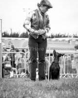 Thame and Oxfordshire Show 2017-99