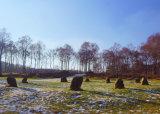 The Nine Ladies Stone Circle.