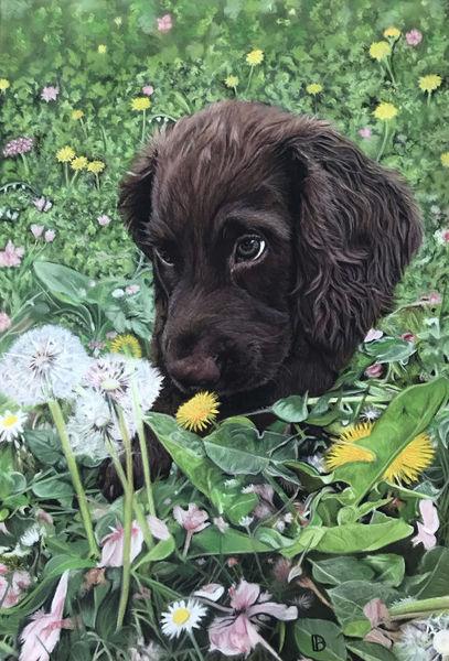 Otis In The Dandelions