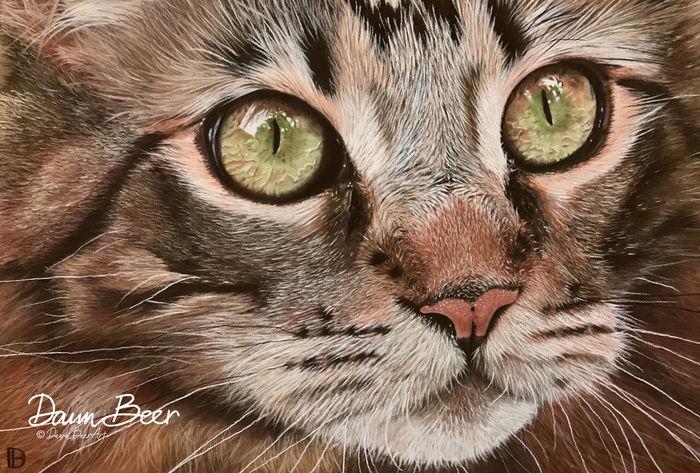 Cat Close Up Reference Photo Lisa Ann Watkins