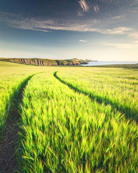 Coastal Farming North Pembrokeshire
