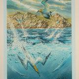 Diving Gannets