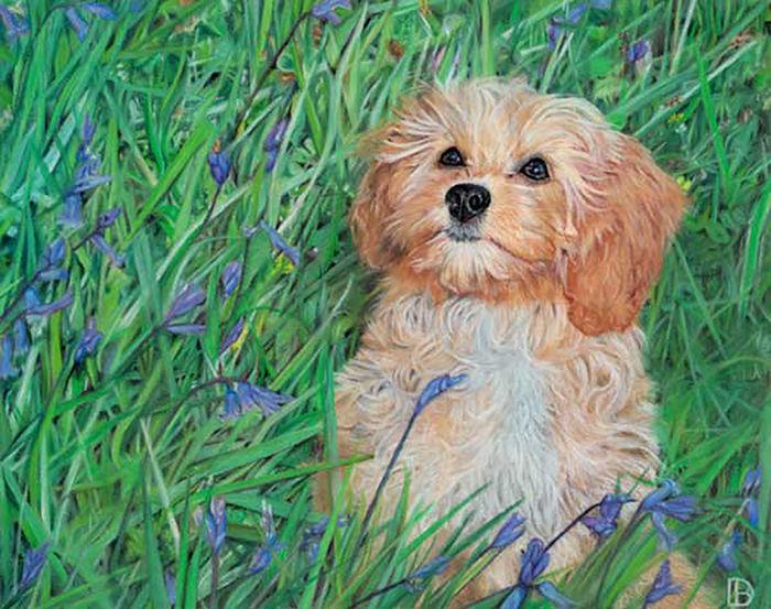 Poppy In The Bluebells