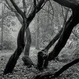 244-Trengwainton Gardens