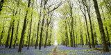 Dockey Wood 1