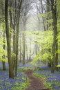 Dockey Wood 2