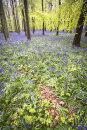 Dockey Wood 3