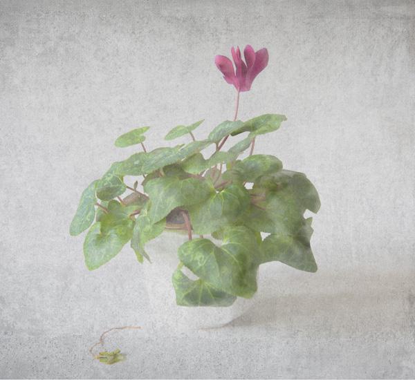 Flower texture 1