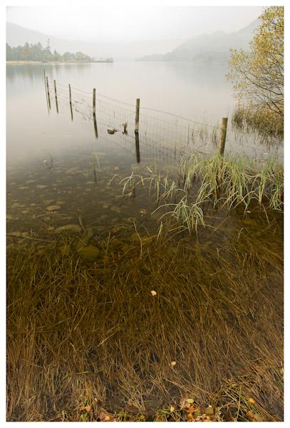 Lake Roots