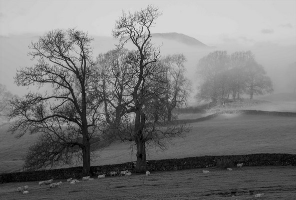 Esthwaite Morning