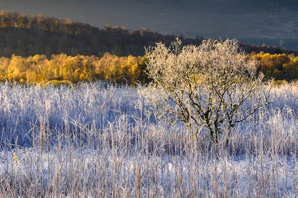 Cairngorm Autumn Frost