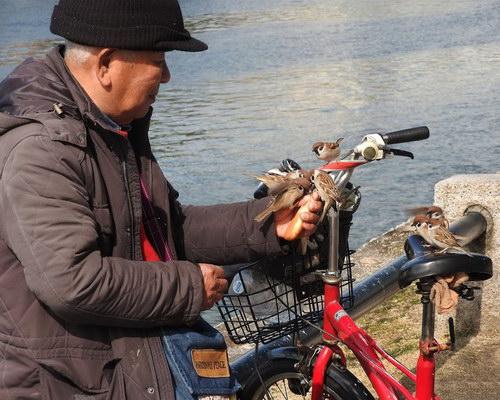 Birdman of Hiroshima