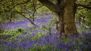 Bluebell Wood Movement