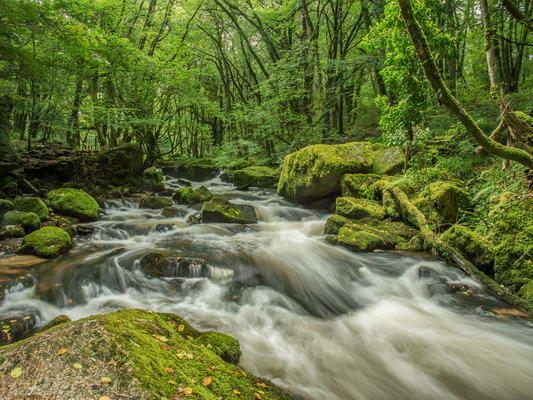 River Fowey At Draynes Wood