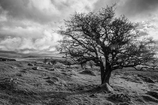 Sentinel Tree By Swelltor