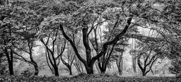 Winkworth Trees