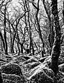 Wistman's Wood