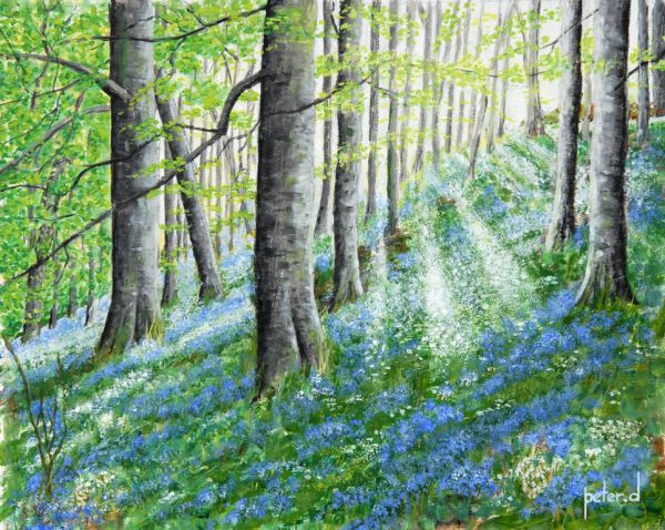 Dawn breaks in bluebell wood ORIGINAL SOLD  Giclee available