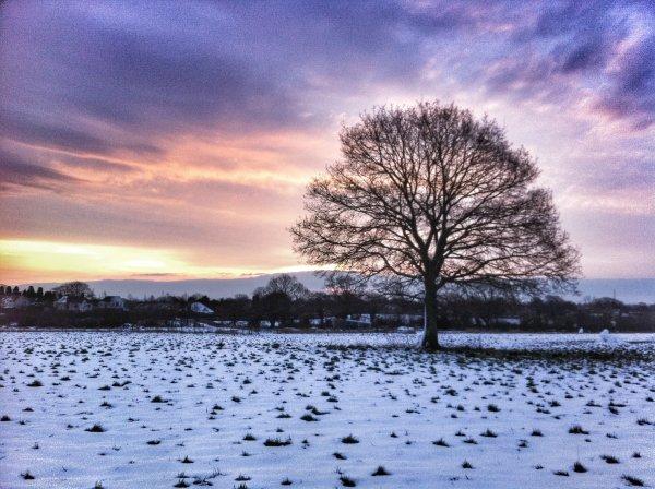 Cornfields in winter