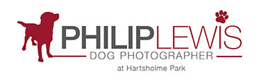 [b]Philip Lewis Dog Photographer[/b]
