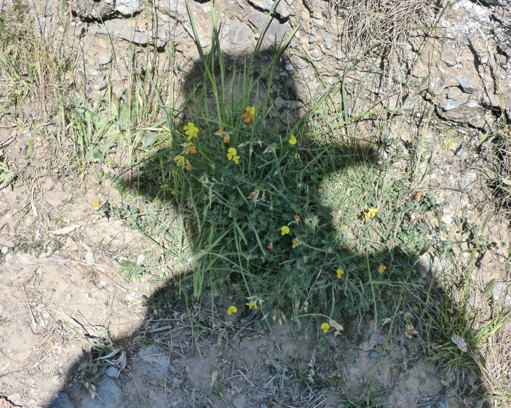 Self Portrait, Wildflowers, Bardsey Island 2018