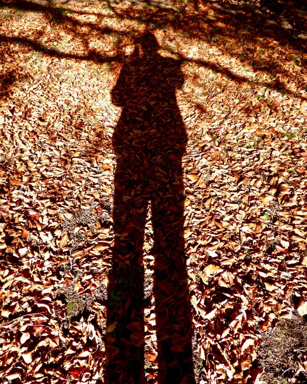 Self Portrait on Beech Leaves 2018