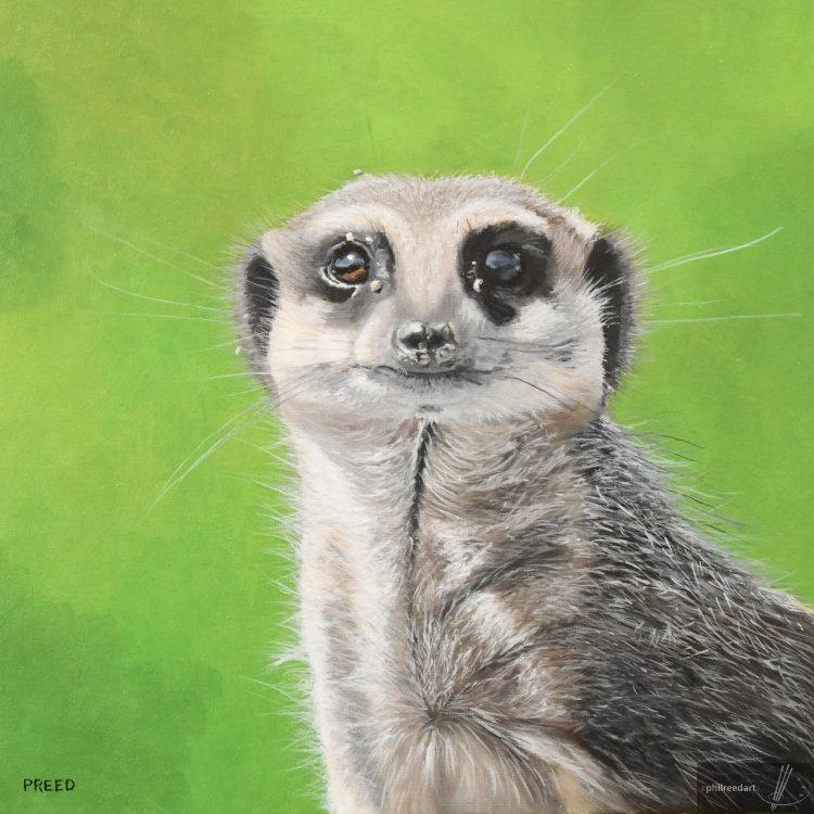 Maurice the Meerkat