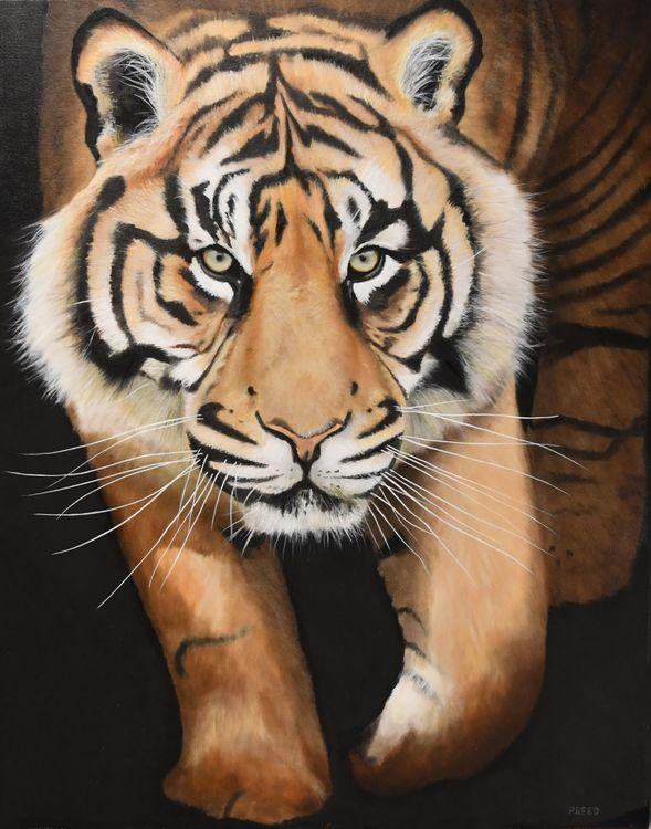 Sumatran Tiger, Kubu