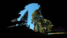 View from inside a Sequoia Tree USA