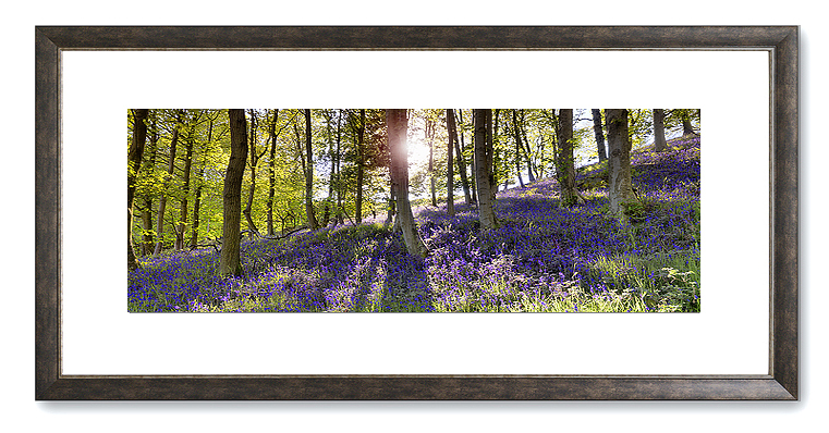 GPC6 - Bluebell Wood