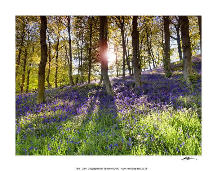 CPP14 Bluebell Woods Lancashire