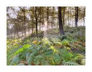 CPP21 Woodland Vision II Near Windermre
