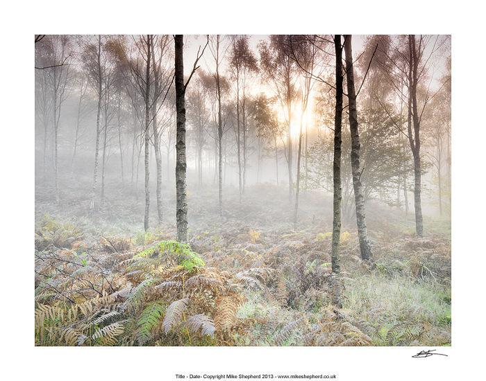 CPP9 Autumn Woods Sunrise
