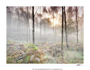 CPP9 Autumn Woods Sunrise