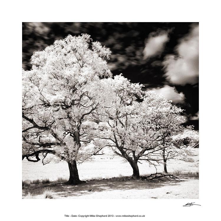 PP36 Infa Red Tree Study