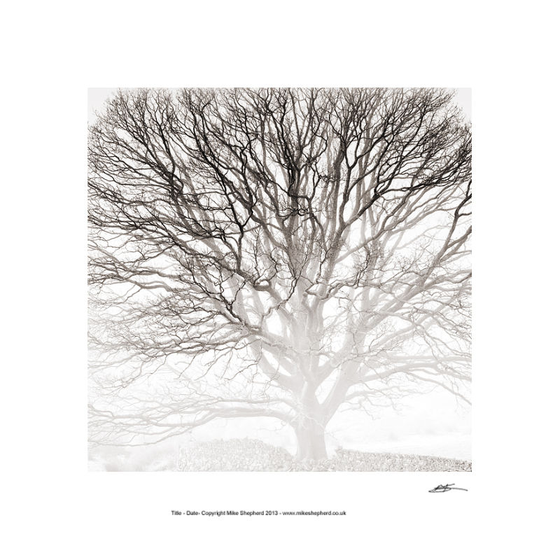 PP43 Winter Tree Study