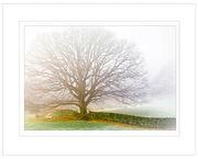CPLF14 - Beech Tree