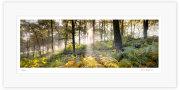 MPP3 - Woodland Vision II