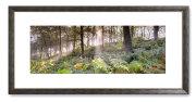 GPC4 - Woodland Vision II