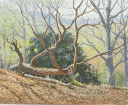 Rackham Woods