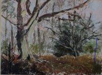 Trees ay RSPB Pulborough Brooks