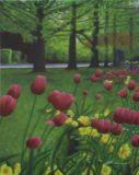 Tulips in Haywards Heath