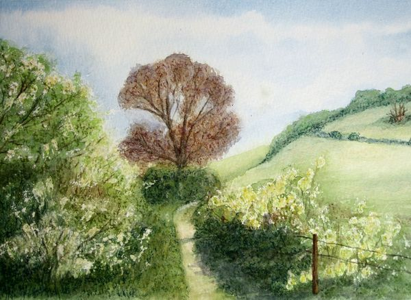 May on the South Downs Way by Judy Palmer