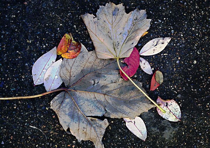 Garden Leaves No2