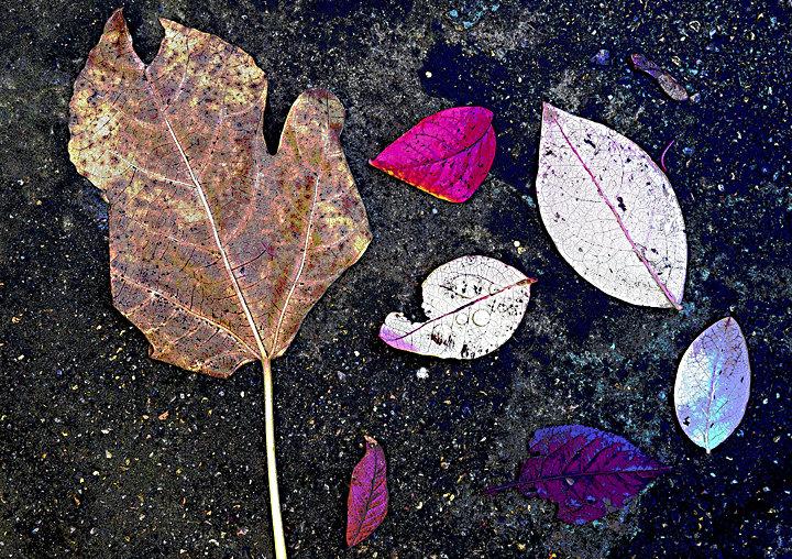 Garden Leaves No3