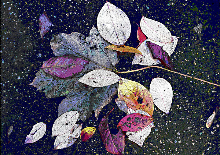 Garden Leaves No4